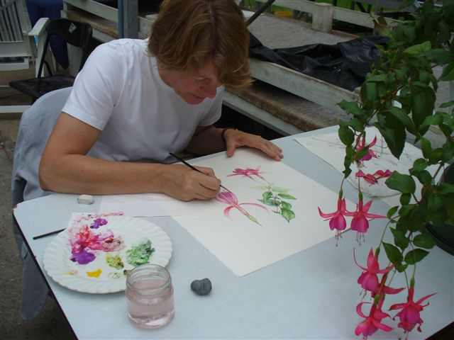 Botanische Tuin Alkmaar : Cursus botanisch tekenen bij hortus alkmaar lief langedijk